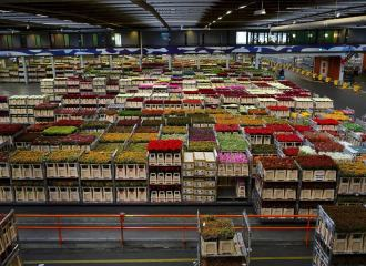 View across the inside of a flower warehouse with palletised flowers in crates